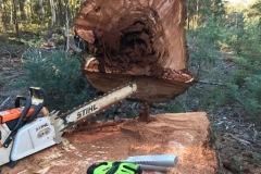 Big-Tree-1